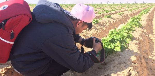 Soil observation at the organic farm